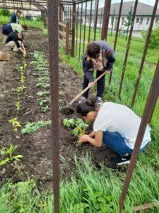 People working in the garden